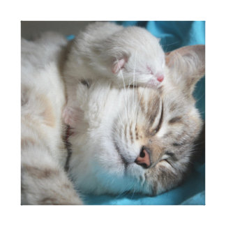 Kitten and mom canvas print