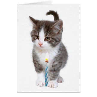 Kitten and one blue candle card