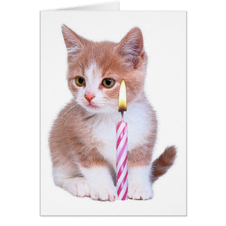 Kitten and one pink candle cards