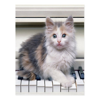 Kitten And The Piano Post Cards