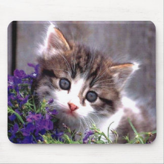 Kitten And Violets Mousepads