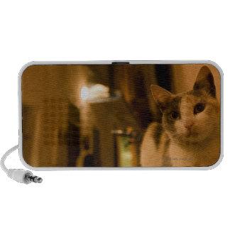 Kitten at dusk, Morocco Mini Speaker