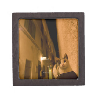 Kitten at dusk, Morocco Premium Jewelry Box