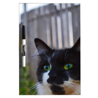 Kitten At Twilight Dry Erase Boards