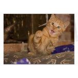 Kitten Attack Card
