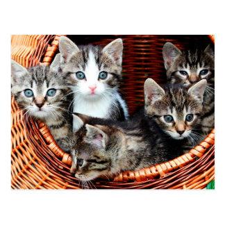 Kitten Basket Postcard