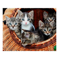 Kitten Basket Poster