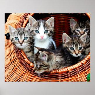 Kitten Basket Poster