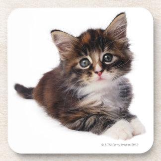 Kitten Beverage Coaster