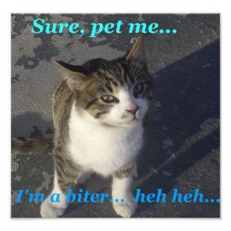 Kitten Bites Photo Print