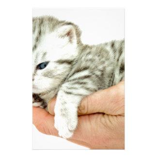 Kitten british shorthair silver tabby on hand stationery