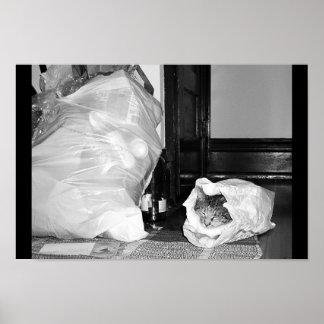 Kitten Bye the Trash Poster