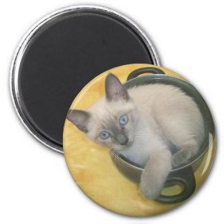 Kitten Cacciatore Refrigerator Magnet