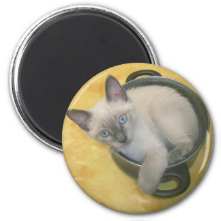 Kitten Cacciatore Refrigerator Magnets