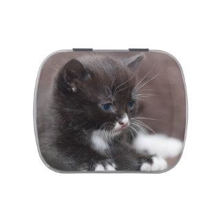 Kitten Candy Tins