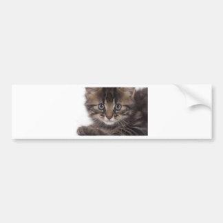 kitten car bumper sticker