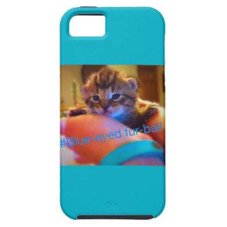 Kitten case