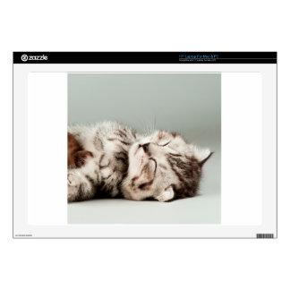 kitten, cat, cute tabby cat, cute cats, cute kitte decal for laptop