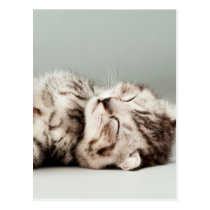kitten, cat, cute tabby cat, cute cats, cute kitte postcard