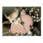Kitten Cat Easter Chick Colored Painted Egg Postcard