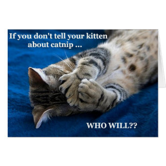 Kitten catnip cards