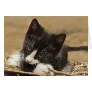 Kitten Chewing on Stick Card