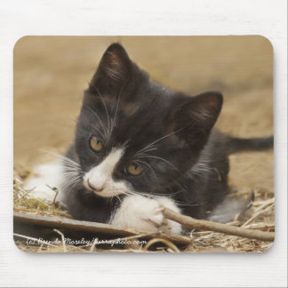 Kitten Chewing on Stick Mouse Pad