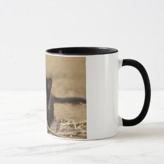 Kitten Chewing on Stick Mug