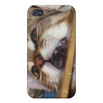 Kitten Chomp iPhone Case