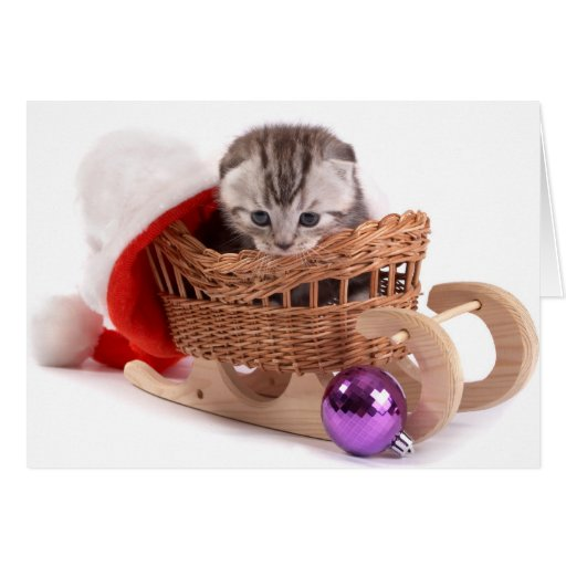 Kitten Christmas Card - Mr. Kitty Little Ears