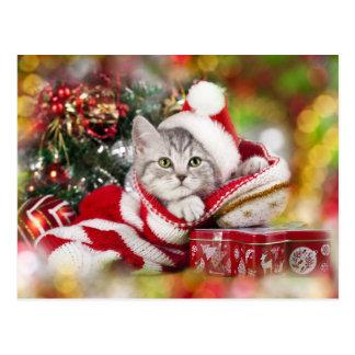 Kitten Christmas Wearing Santa Hat Postcard