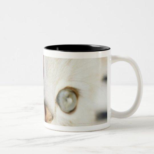 Kitten, close-up 2 Two-Tone coffee mug