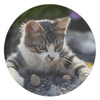 Kitten, close-up melamine plate