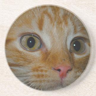 Kitten Beverage Coasters