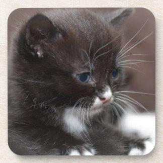 Kitten Coaster
