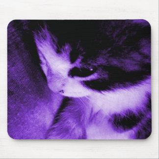 Kitten Contrast Purple Mouse Pad