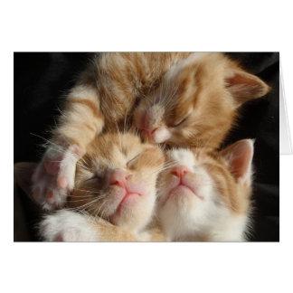 Kitten Cuteness Card