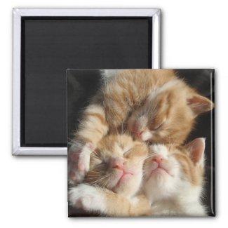 Kitten Cuteness Magnet magnet