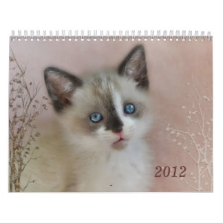 Kitten Cuties Calendar
