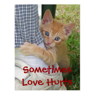 Kitten Dax Love Hurts Postcard