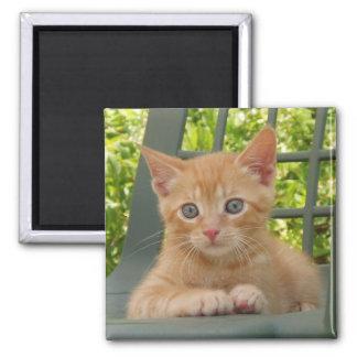 Kitten Dax Magnet