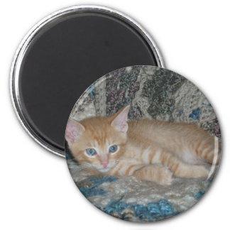 Kitten Dax on Afghan Magnet
