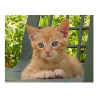 Kitten Dax Postcard