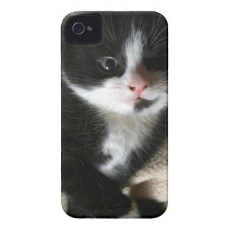 Kitten decal iPhone 4 cover