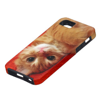 kitten design iPhone SE/5/5s case