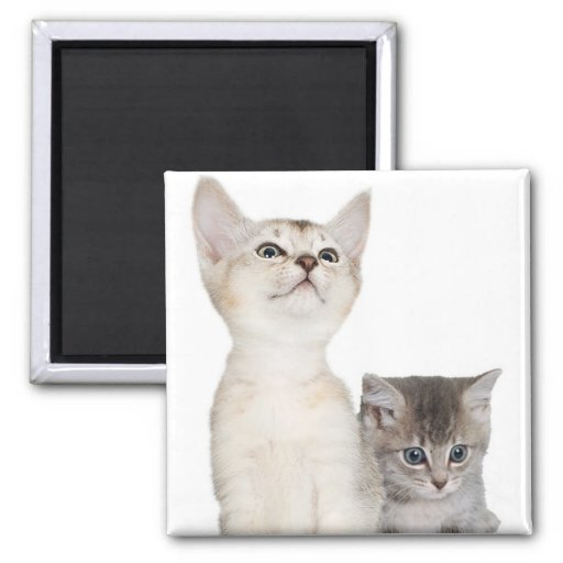 Kitten design to help make your Christmas Merry! Refrigerator Magnet