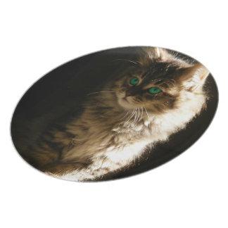 Kitten Dinner Plate