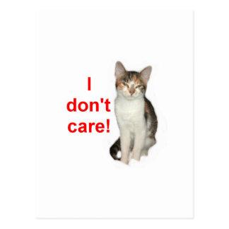 Kitten Doesnt Care Postcard