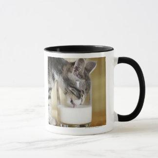 Kitten drinking milk from glass mug