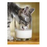 Kitten drinking milk from glass post card